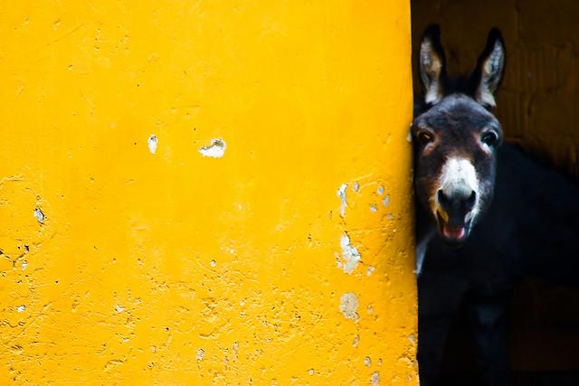 """Bild: """"What's up, Dude?"""" von  Jürgen Schiller García. Lizenz: CC BY 2.0"""