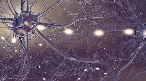 Reizweiterleitung in den Nervenzellen
