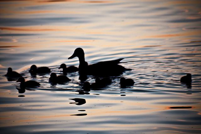 """Bild: """"lil'family"""" von Cliff. Lizenz: CC BY-ND 2.0"""
