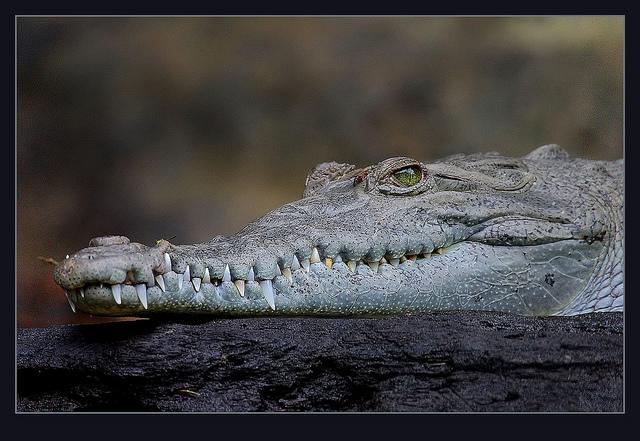 """Bild: """" Dare-devil dentist wanted!"""" von Steve Garvie. Lizenz: CC BY 2.0"""