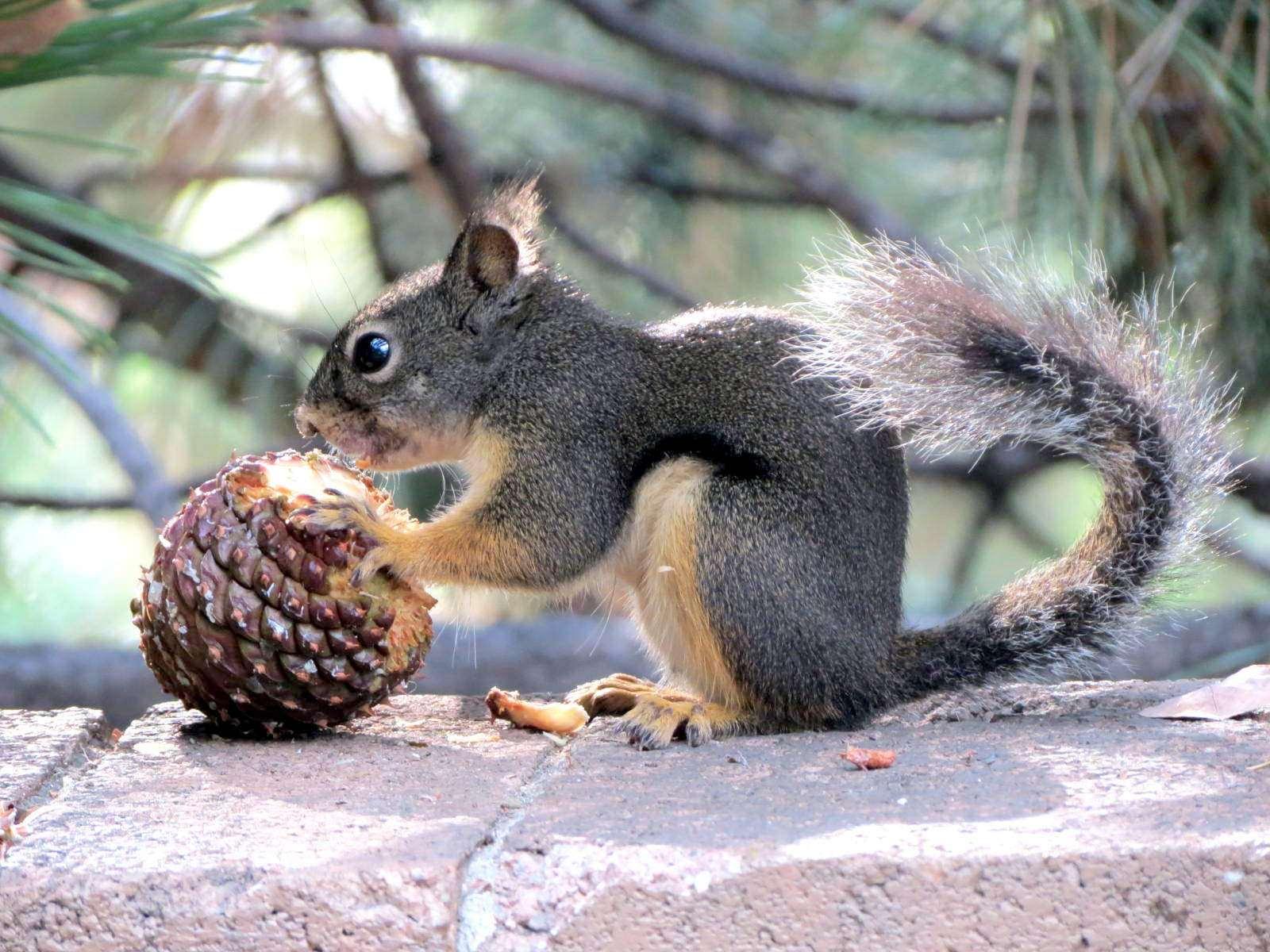 Bild: Squirrel von Kathleen Christiansen. Lizenz: CC BY 2.0