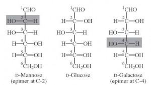 galaktose glucose mannose