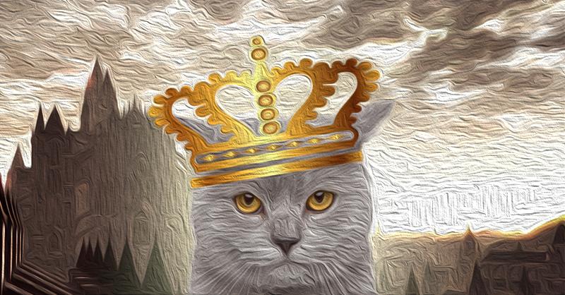 katzenkönig