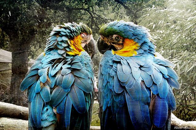 Papagei - Sprachen lernen