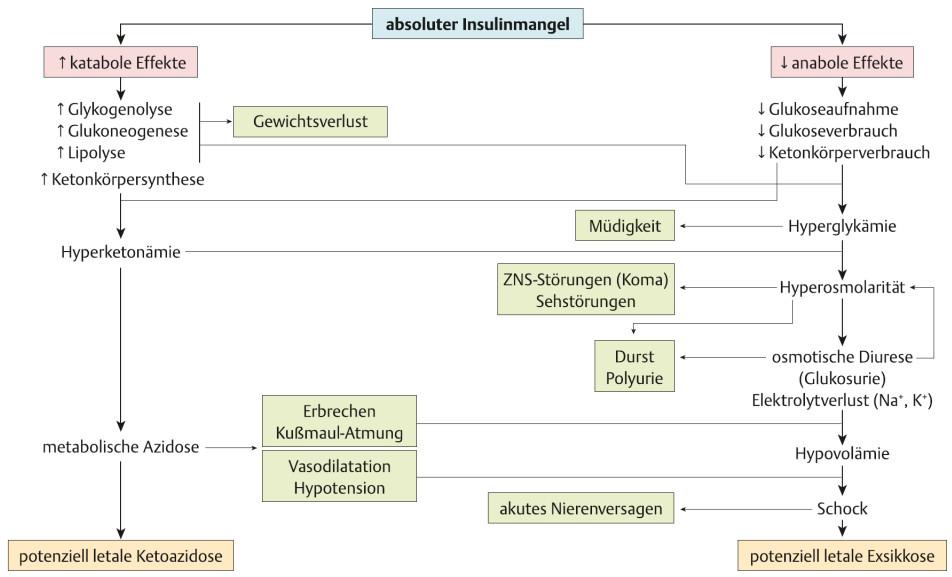 Pathogenese des ketoazidotischen Komas