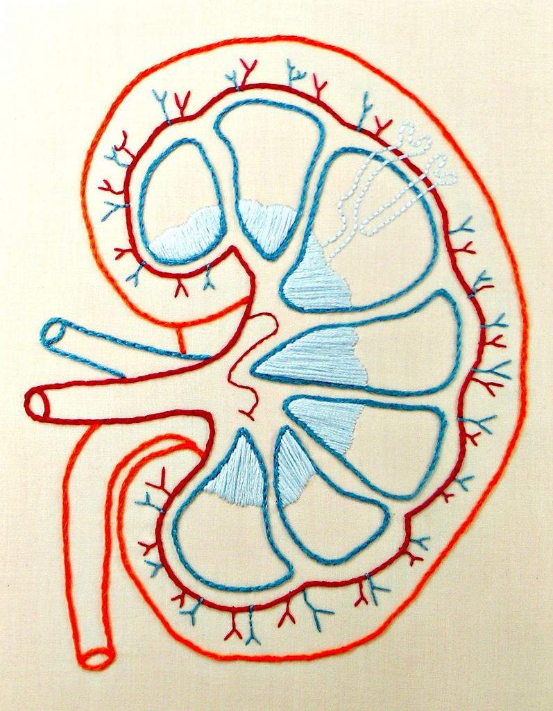 """Bild: """"Framed Embroidery Kidney Anatomy Art. Hand Embroidered."""" von Hey Paul Studios. Lizenz: CC BY 2.0"""