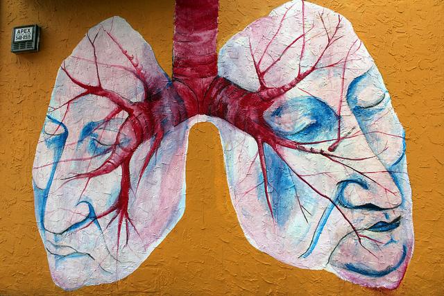 "Bild: ""Lungs"" von Quinn Dombrowski. Lizenz: CC BY-SA 2.0"
