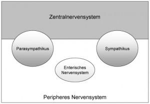 ANS_mit_enterisch