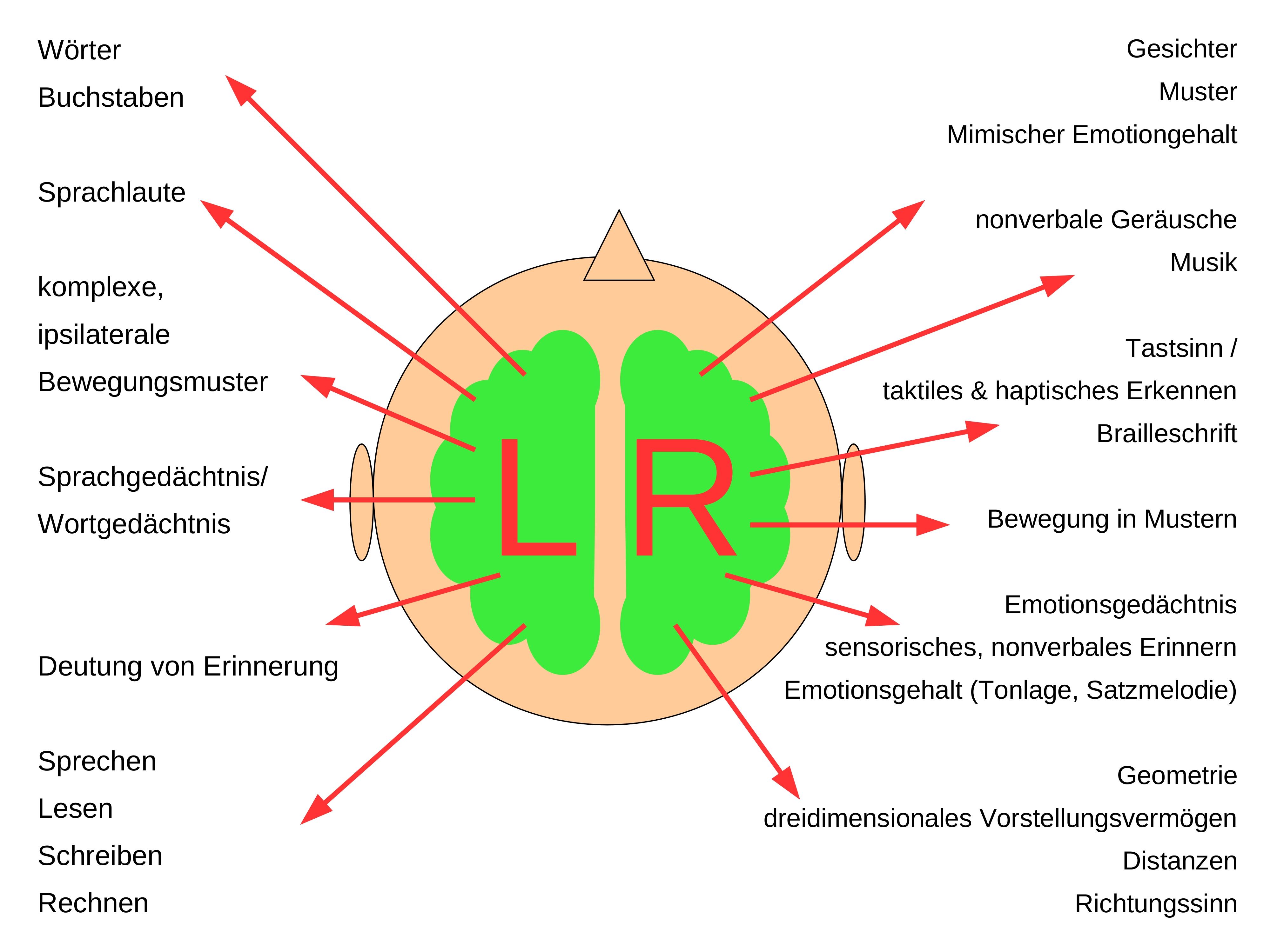 Gehirn (Encephalon, Cerebrum) || Med-koM