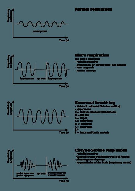 Anomalien-der-Atmung