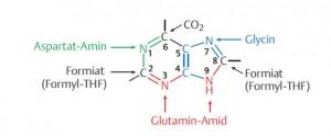Nukleotide 3