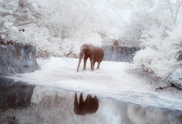 "Bild: ""elephant"" vongreg westfall. Lizenz: CC BY 2.0"