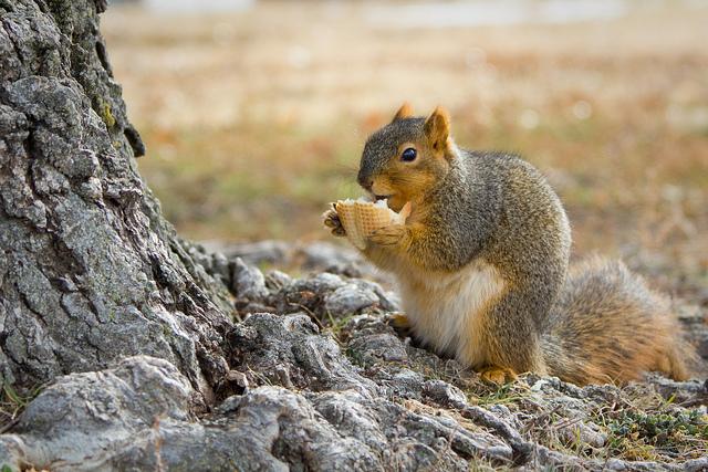 das ist ein essendes eichhörnchen