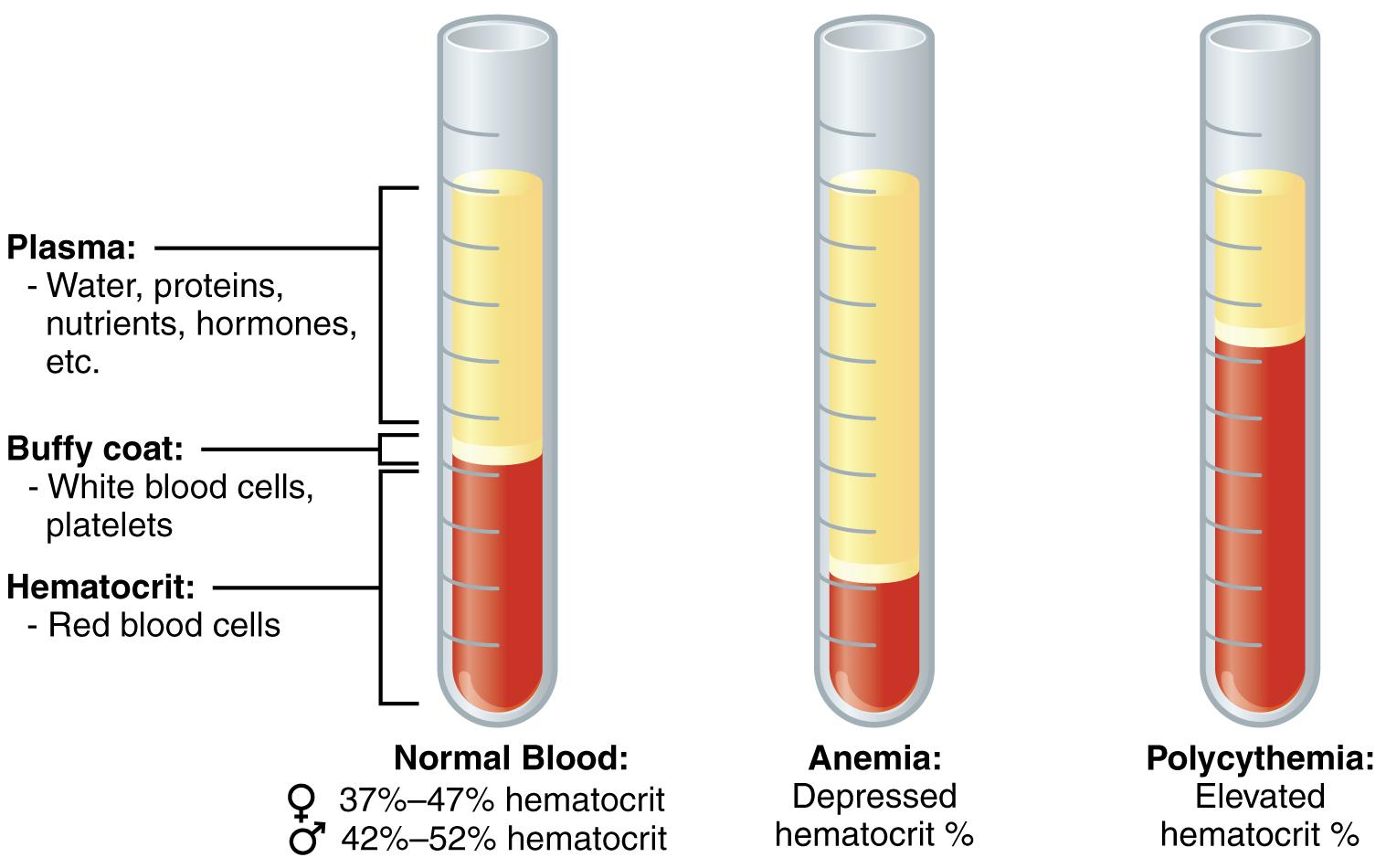 Blutbestandteile