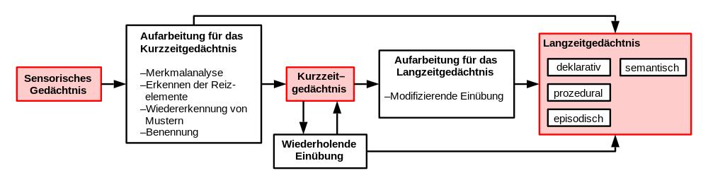 Modell des menschlichen Gedächtnisses