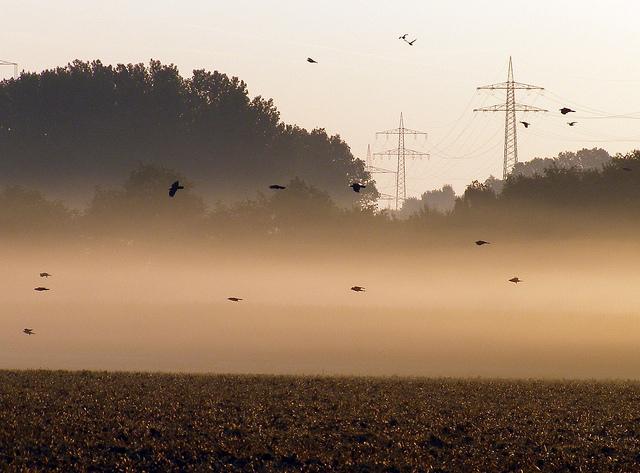 """Bild: """"Crow Flight"""" von Erich Ferdinand. Lizenz: CC BY2.0"""