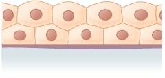 mehrreihiges isoprismatisches Plattenepithel