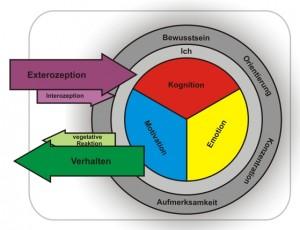 Modell der menschlichen Psyche