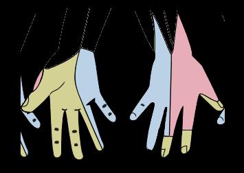 Die Hautinnervation des rechten Oberhand