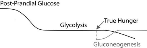 Gluconeogenese Kurve