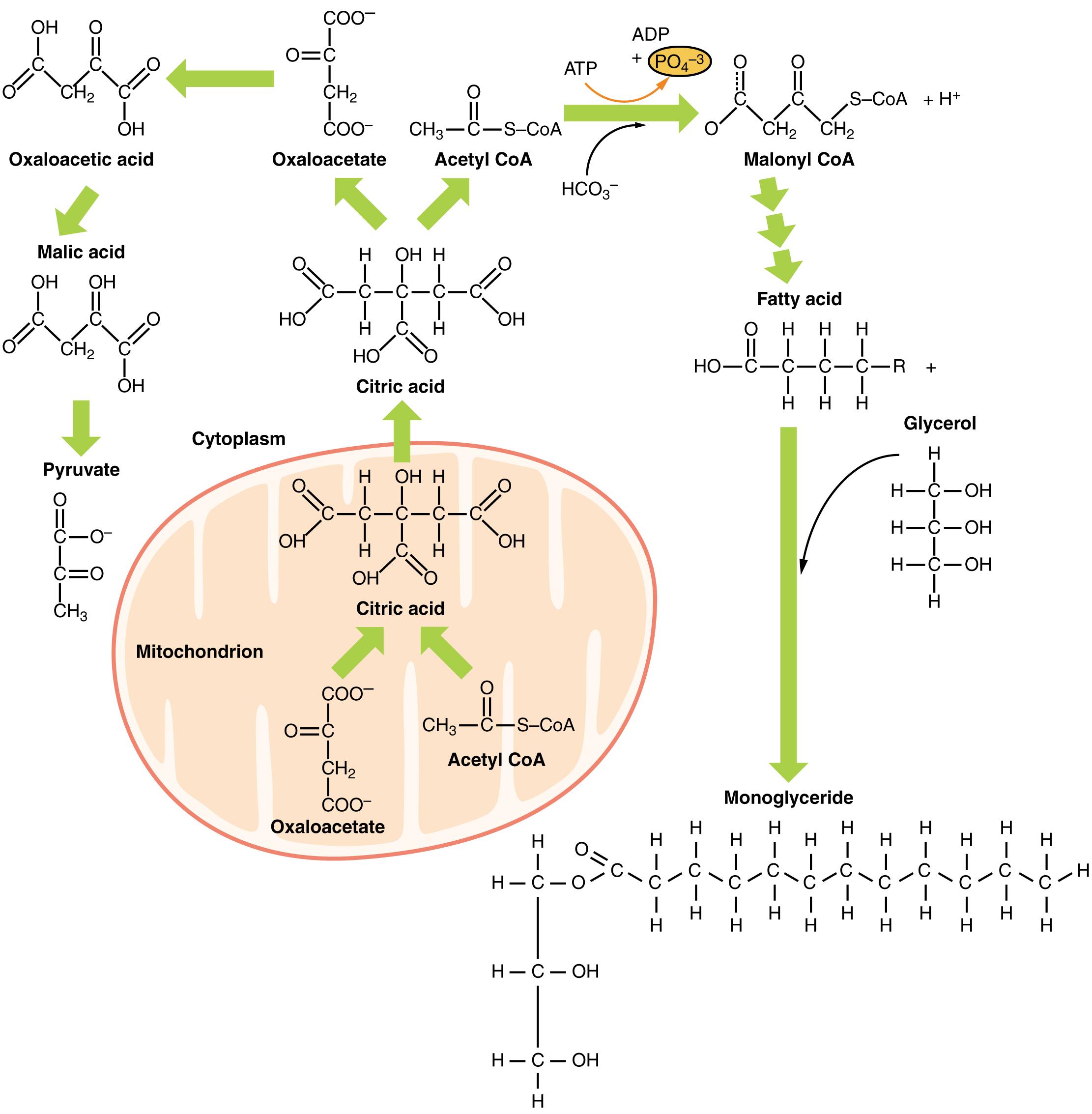 Lipidstoffwechsel