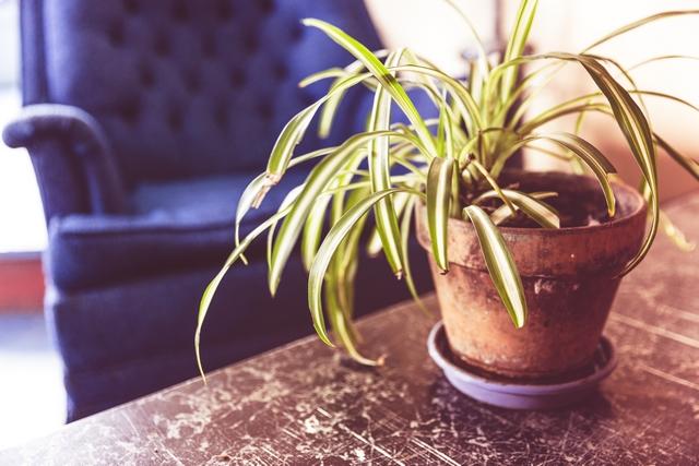 das ist eine zimmerpflanze