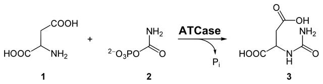 diese abbildung zeigt die synthese von carbamoylaspartat