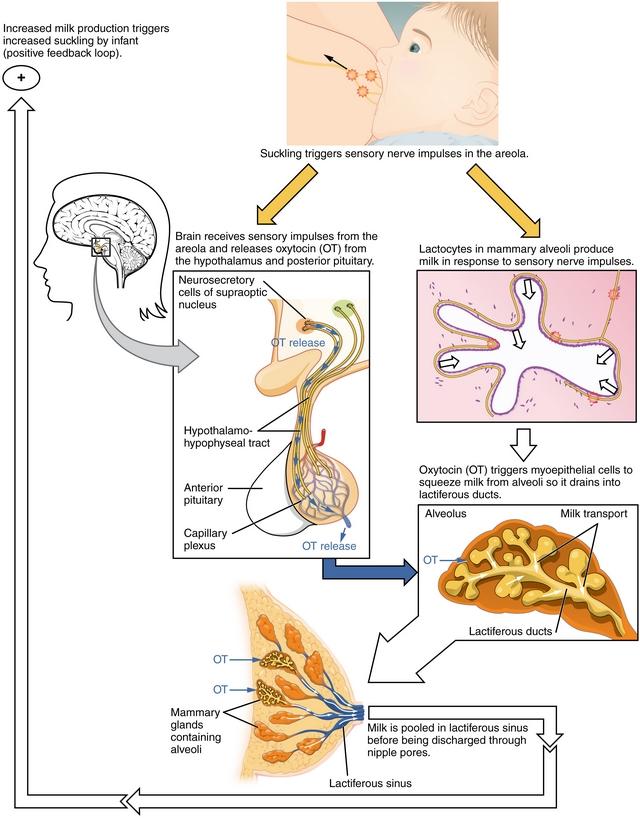 Transdukcija signalov in hormoni-5262
