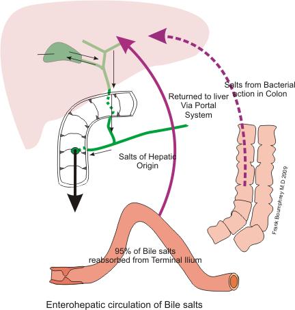 enterohepatischer Kreislauf