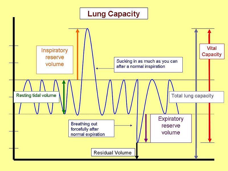 Die Physiologie Der Atmung