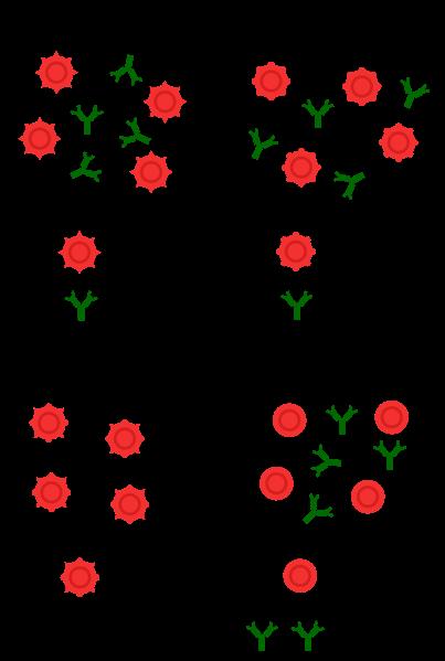 Blutgruppen AB0-System