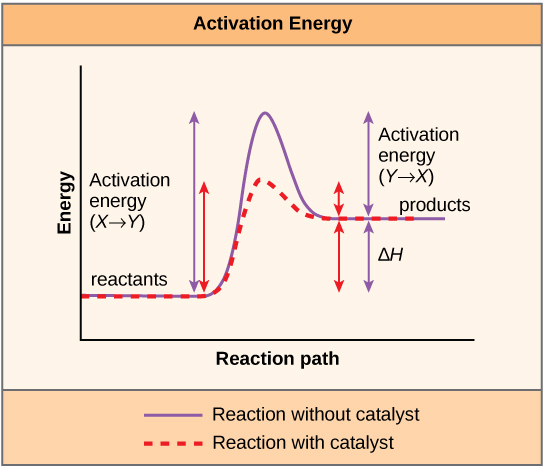 do catabolic and anabolic reactions require enzymes