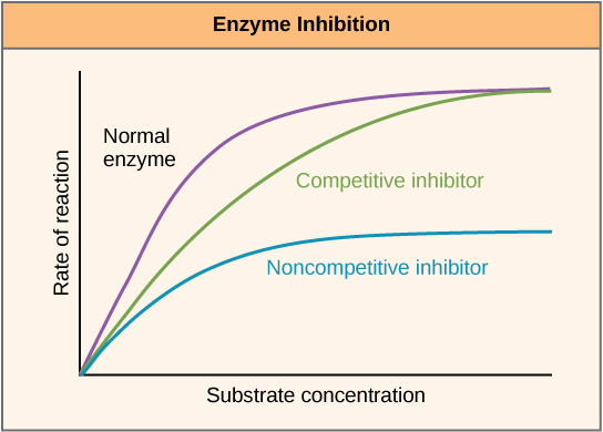 Inhibition von Enzymen