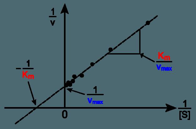 Lineweaver-Burk-Diagramm