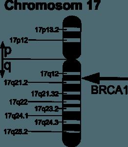 Darstellung des BRCA1-Gens