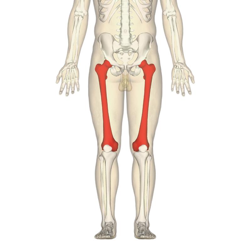 Lage der Oberschenkelknochen