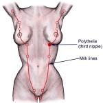 Milchleiste-weiblicher-Körper