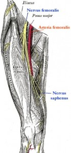 N. femoralis