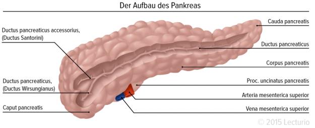 Pankreas1