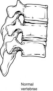 Rückenwirbel