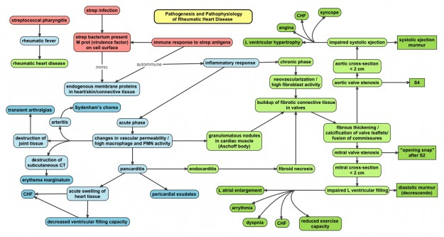 Pathophysiology map of rheumatic fever and rheumatic heart disease