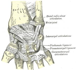 baender-der-hand-anterior