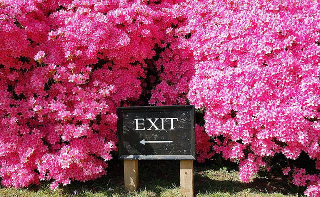 exit-schild-vor-blüten