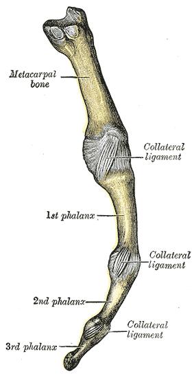 fingerknochen