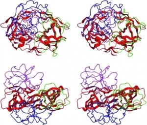 HIV-protomer