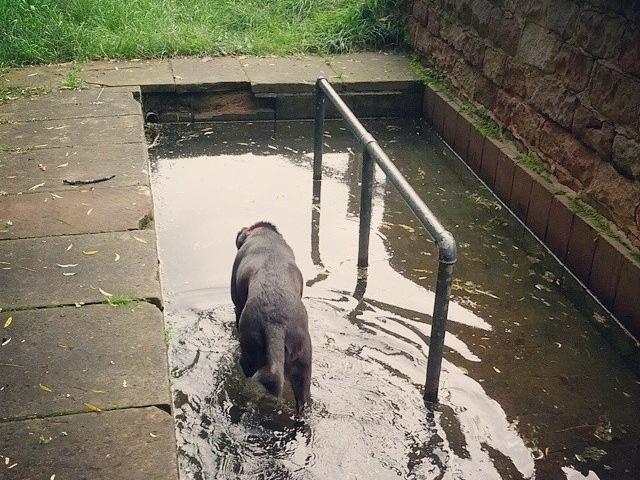 """Bild: """"Lässt sich keine Gelegenheit für eine Kneipp-Anwendung entgehen @halberhund"""" von Bernd Baltz. Lizenz: CC BY 2.0 Das Bild wurde zugeschnitten."""