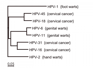 HPV-uebersicht