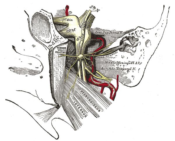 Ganglion oticum