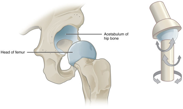 A multiaxial joint, such as the hip joint, allows for three types of movement: anterior-posterior, medial-lateral, and rotational.